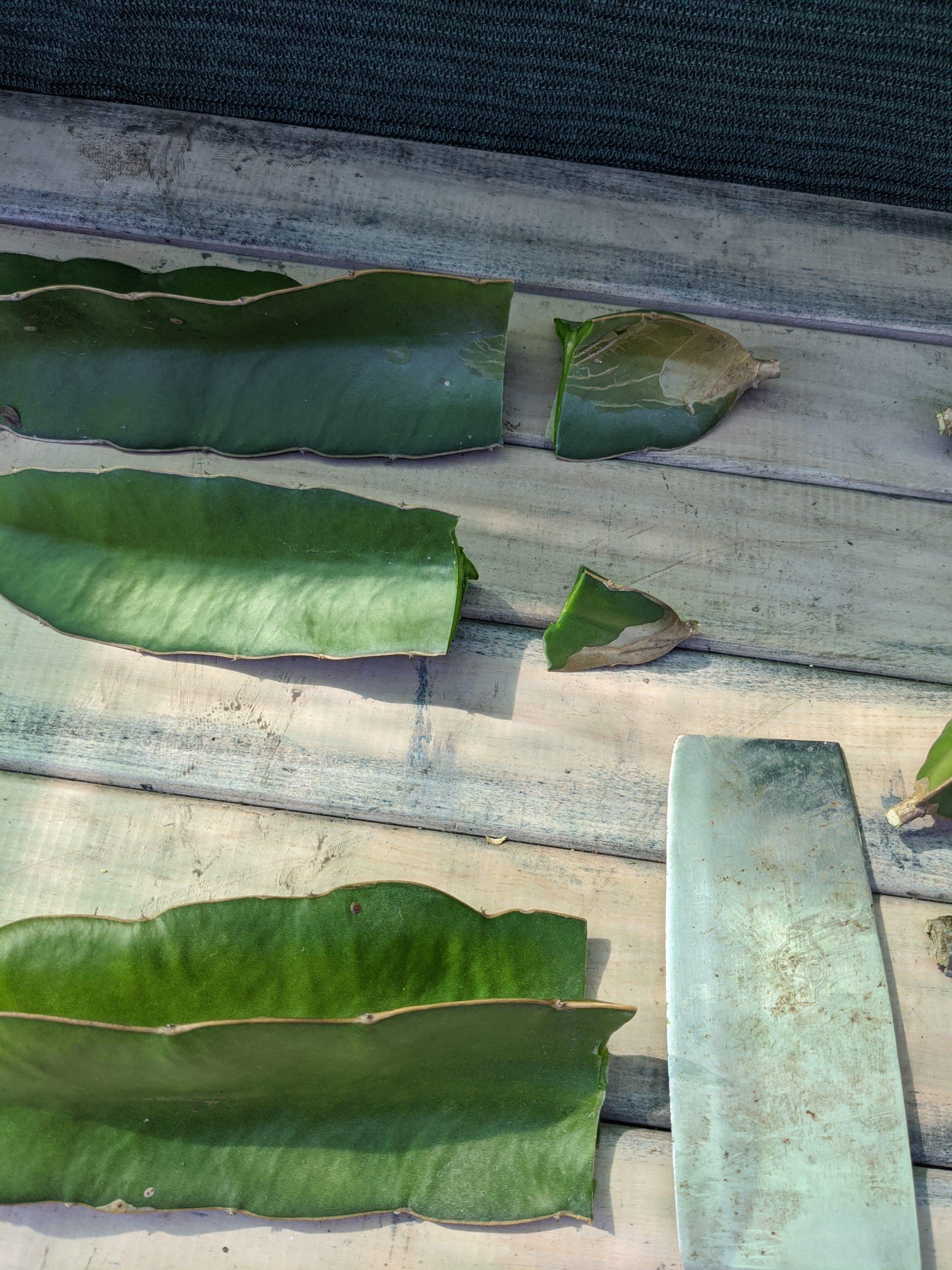 Shortened cuttings